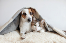 dog and cat under a blanket